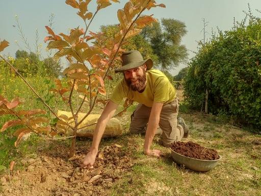 Vermicompost is an organic fertilizer