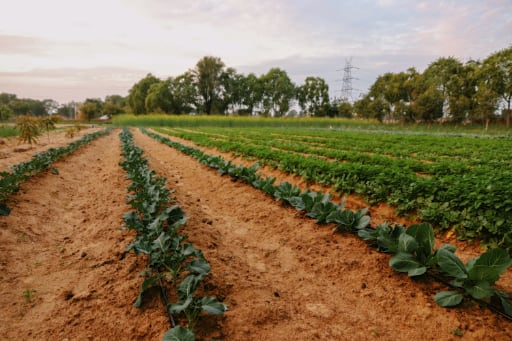 Drip irrigation is a more efficient way to deliver water to trees